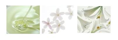 源自日本 以亚洲审美塑造 细腻柔软 晶莹剔透の花瓣肌